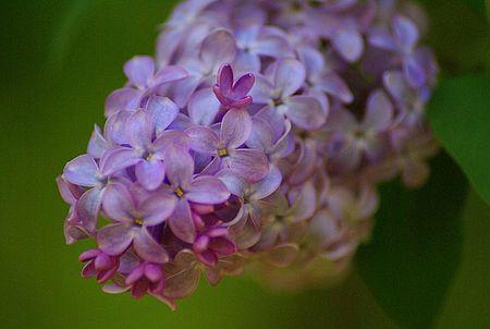 Lilac 2 UTO