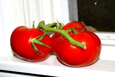 Tomatoes on windowsill UTO