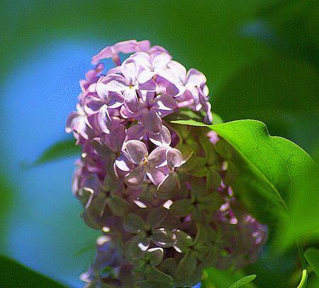 Lilac 1 UTO